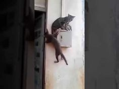 funny cat videos | Funny Cats in Pakistan very funny videofunny | funny videos of cats and kittens -  #animals #animal #pet #cat #cats #cute #pets #animales #tagsforlikes #catlover #funnycats Funny Cats In Pakistan very funny videofunny funny cats,funny cat videos,funny animals,funny video,cats funny,funny videos,funny cat funny videos of cats and kittens funny cat videos cute cat videos funny... - #Cats