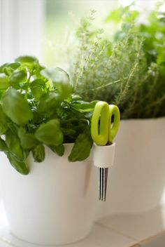 Double herb pot with scissors - These pots are specifically designed for storing herbs on windowsills or small spaces. They help keep herbs fresh with their elevated bottom for drainage and aeration.