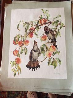 Prints Cecil Golding by LittleTinkThinks on Etsy
