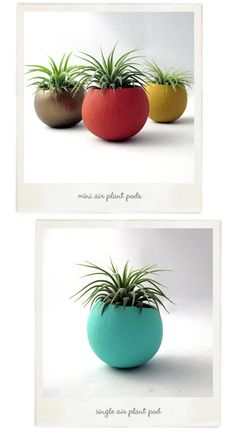 Pretty air plant pods from Sea and Asters.