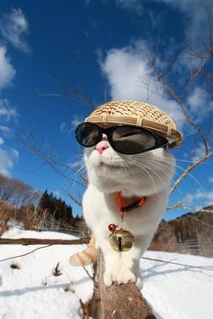 Share your cute animal pictures with us? Funny Cute Cats, Cute Funny Animals, Funny Kittens, Pretty Cats, Beautiful Cats, I Love Cats, Cool Cats, Kittens Cutest, Cats And Kittens