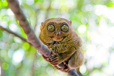 Top 15 animaux les plus laids et moches de toute la planète | Topito