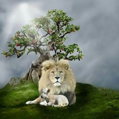 I want to fall down on my face when I see this and worship You! The reigning King, the Lion, the gentle Redeemer, the Lamb, guarding the Tree of Life for a ticket to eternity and bliss. Lamb Pictures, Jesus Pictures, Christian Artwork, Christian Pictures, Lion And Lamb, Lion Love, Tribe Of Judah, Bride Of Christ, Prophetic Art