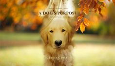 """A Dog's Purpose : """" Every Dog Happens For A Reason """" In Theatres : 27 January 2017 (UK) & (USA) Director : Lasse Hallström [...]"""