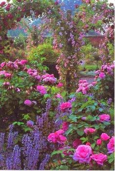 garden, full of summer.