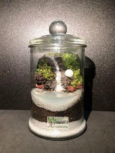 Buy Terrarium, Succulent Terrarium, Waterfall Features, Mini Greenhouse, Low Maintenance Plants, Small Bottles, Water Features, Greenery, Garden Design