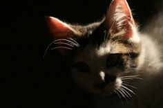 backlit cat - Google Search