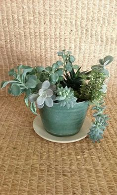 Succulents In Green Bioplanter From A Small Online Plant Nursery Phoenix Az Local