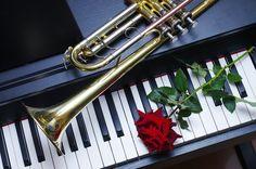 Grand Piano Room, Violin Art, Photo Class, Gif Photo, Piano Keys, Architecture Tattoo, Mascarade Mask, Sister Love, Rose Wallpaper