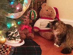 The Joyous Holidays can be Stressful for your Cat