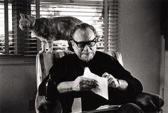 """Charles Bukowski escribía sobre los gatos: """"Caminan con una dignidad sorprendente, pueden dormir 20 horas al día sin duda y sin remordimiento, estas criaturas son mis profesoras""""."""