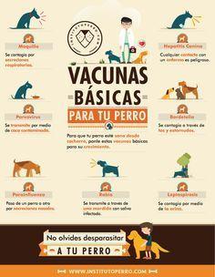 Cuidado de las mascotas en el hogar