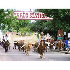 Here you find the Wild West cowboys & long horn cattle drive a 11:30 or 4 pm! Unique shops! Lots of Fun!