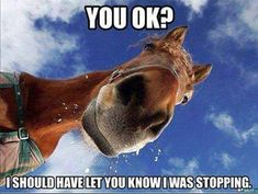 You Ok funny memes animals horse meme lol funny quotes cute. humor funny animals The most funny caps Funny Horse Memes, Funny Horses, Cat Memes, Funny Animals, Funny Memes, Horse Humor, Cats Humor, Animal Funnies, Animal Jokes