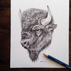 Pencil sketching today. #bison #art