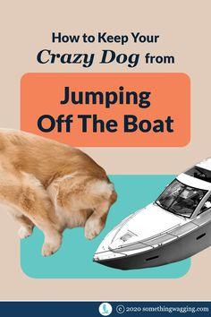 Worried about your dog jumping off the boat? Here's how to keep them safely onboard. Sailboat Living, Living On A Boat, Dogs On Boats, Kinds Of Dogs, Crazy Dog, Dog Training Tips, Health And Safety, Dog Accessories, Adventure
