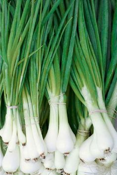 ***better for you than regular white onions -yipee!  These stalks, also known as scallions, spring onions, and salad onions, have a whopping 140 times mo... - Getty Images