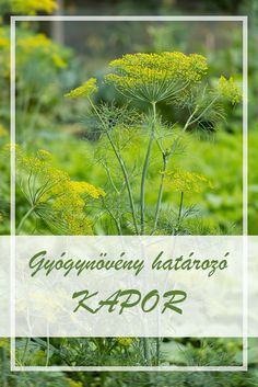 Tabu, Vertigo, Health And Nutrition, Beautiful Gardens, Herbalism, Spices, Herbs, Healthy, Plant