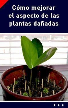 Cómo mejorar el aspecto de las plantas dañadas