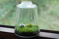 tiny sheep terrarium, DIY?????