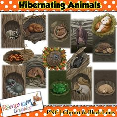 This Hibernating Animals Clip art set consists of realistic images. There are 14 animals each has been drawn in the typical place they would choose to hibernate.You will get the following animals in hibernation: - Bat- Bear- Beaver- Chipmunk- Frog- Groundhog- Hamster- Hedgehog- Lemur- Raccoon- Skunk- Snake- Squirrel- TurtleYou will get 3 copies of each image (42 images in total) in the following formats: black and white; colored with colored outlines and colored with black outlines.All…