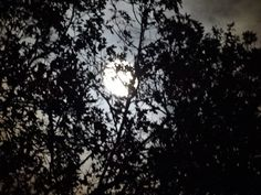 The tree photo bombed my moon picture. :)