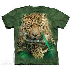 Majestátny leopard | Dedoles.cz