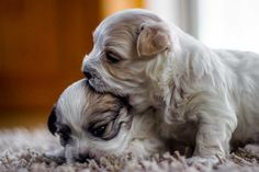 """Your ear tastes lovely ! Some Pictures, Ear, Puppies, Friends, Dogs, Cute, Animals, Animales, Puppys"