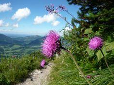 Salewa-Klettersteig am Iseler Allgäu Oberjoch  Hier geht's zur Tour: http://www.outdooractive.com/de/klettersteig/allgaeu/salewa-klettersteig-am-iseler/1374728/#axzz28gMDslDw