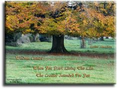 """""""Wisdom comes when you start living the life the Creator intended for you."""" Native American saying on photo of tree in autumn. Spiritual Quotes To Live By"""