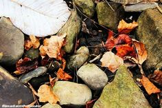 #alabama #alabamaparks #alabamafindings #cullmanal #cullman #love #nature #photography #pictures #photo #cute #naturephotography #professionalpictures #pretty #beautiful #beauty #professional #rocks #hannahhansenphotography #leaves #vinemont #vinemontal