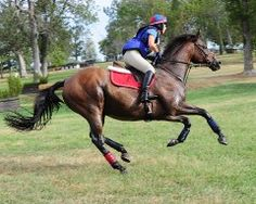 "OTTB Showcase: Pirate's Bid (a.k.a. ""Pirate"") 