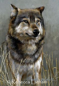 Scent in the Breeze - Wolf by Rebecca Latham