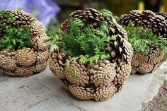 Beautiful decorating and/or gift idea! I could make loads of these for xmas.Beautiful decorating and/or gift idea! I could make loads of these for xmas.Beautiful decorating and/or gif. Pine Cone Art, Pine Cone Crafts, Pine Cones, Rustic Christmas, Christmas Wreaths, Xmas, Christmas Ornaments, Advent Wreaths, Nordic Christmas