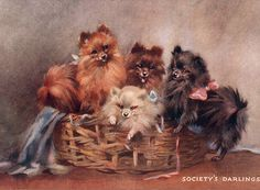 POMERANIAN SPITZ THREE DOGS LOVELY OLD STYLE DOG ART PRINT READY MATTED