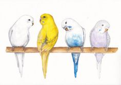 Budgies Original watercolor Home decor wall art Birds by Sweetpic