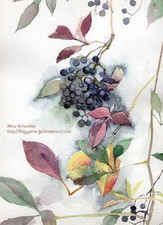 vini【水彩】本日もスケッチびより!-倾心水彩,倾心植物。 Flower Paintings, Painting Flowers, Watercolor Paintings, Flower Watercolor, Fruit Art, Illustrations And Posters, Watercolors, Florals, Berries