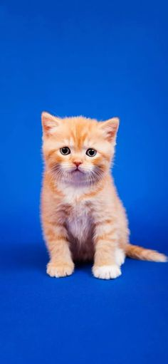 Kittens Cutest, Cats And Kittens, Cute Cats, Cat Wallpaper, Ginger Cats, Gods Grace, Cat Love, Beautiful Creatures, Beautiful Images