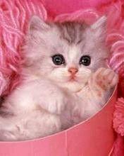 47-cute-kitten | Flickr - 相片分享!