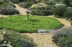 Chamomile Lawn In Herb Garden Sticky Wickets Buckland Newton