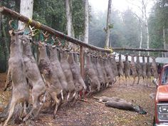 -Buck pole in the U.P. of Michigan-island-deer....well there goes that population lol