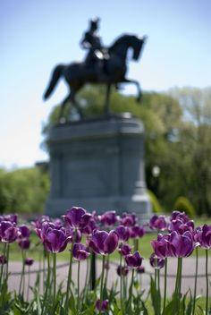 Spring in Boston Public Garden, Massachusetts