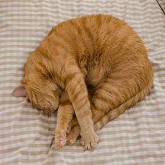 ぼくわちくわ Cute Cats And Dogs, I Love Cats, Cats And Kittens, Cute Baby Animals, Animals And Pets, Amor Animal, Cat Reference, Orange Tabby Cats, Monokini Swimsuits