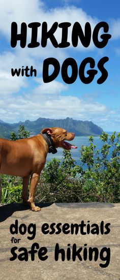 Hiking with dogs: Es