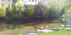 calw-diversion-naturaleza-aguas-termales