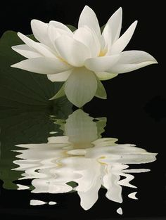 Water Lilly unfurling, beautiful, via Flower Story