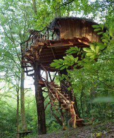 maison pour des séjours dans les arbres