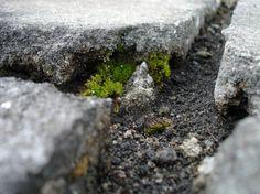 Olhares.com Fotografia | �Sidney Ganho | Vale das Formigas!