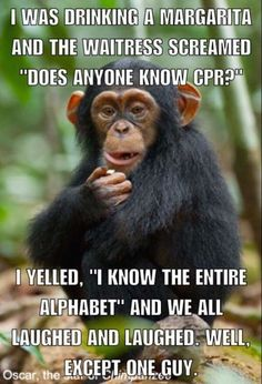 Is it wrong that I think this is funny? - Funny Monkeys - Funny Monkeys meme - - Is it wrong that I think this is funny? The post Is it wrong that I think this is funny? appeared first on Gag Dad. Funny Shit, Haha Funny, Funny Jokes, Hilarious, Cpr Funny, Funny Fails, Funny Stuff, Funny Monkey Memes, Funny Insults