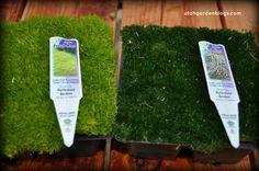 terrarium-moss.jpg (700×465)